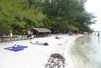 PM08:タヒチ島発・モ-レア日帰りツア- サメ&エイウォッチングとモツピクニック