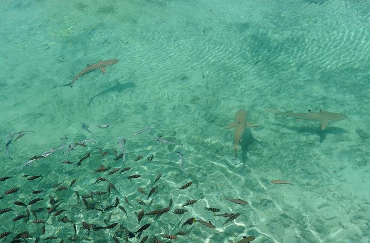 ボラボラ島~ツアモツ諸島にステイする10日間