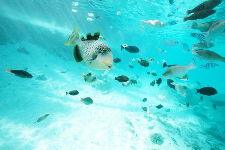 水上バンガローの下に集まる熱帯魚
