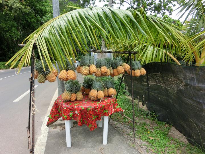 モーレア島のパイナップル